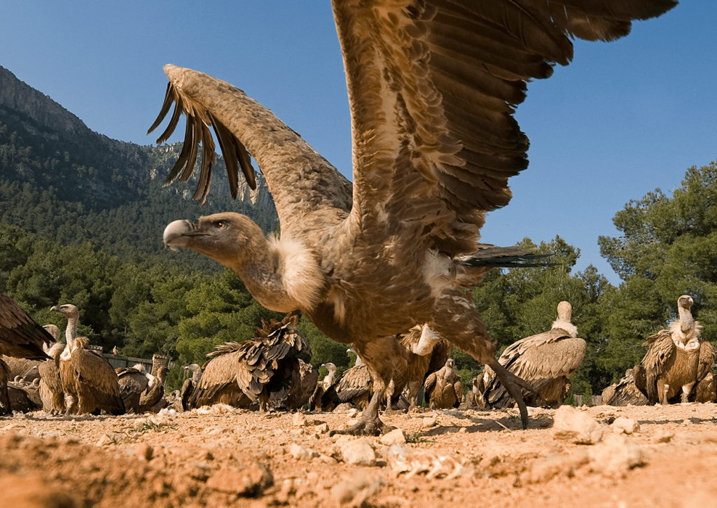 Observatorio de aves Mas de Buñol